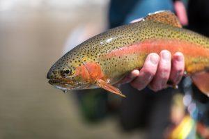 تکثیر و پرورش ماهی